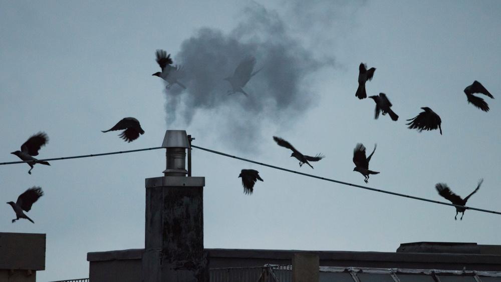 Bærekraft Rapporterer selskapet for kråka?